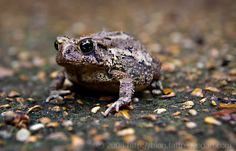 Porch Toad