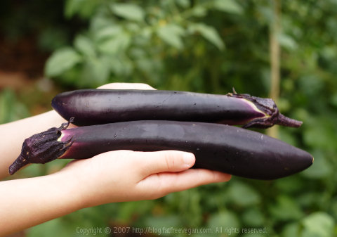 Homegrown Japanese Eggplants
