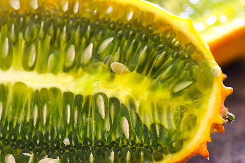 Inside the elusive kiwano