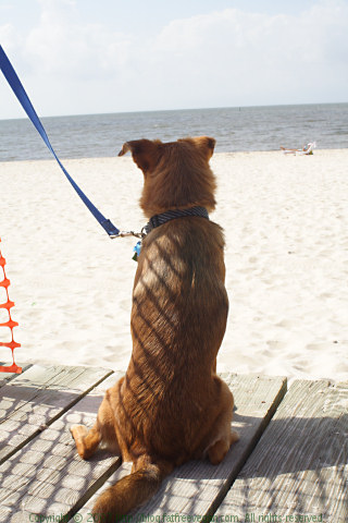 Jazzy and the Beach