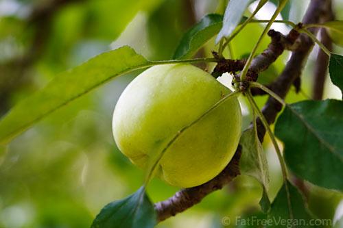 Mississippi Apple