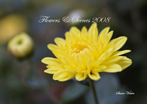 Flowers & Scenes Calendar 2008