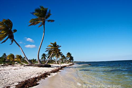 Remote Beach in Costa Maya, Mexico