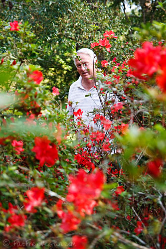 Dad among the azaleas
