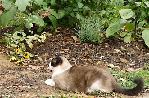 Domino defending the garden