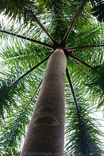 Tree in Hibiscus Project Garden, Guatemala
