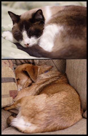 Hibernating Pets