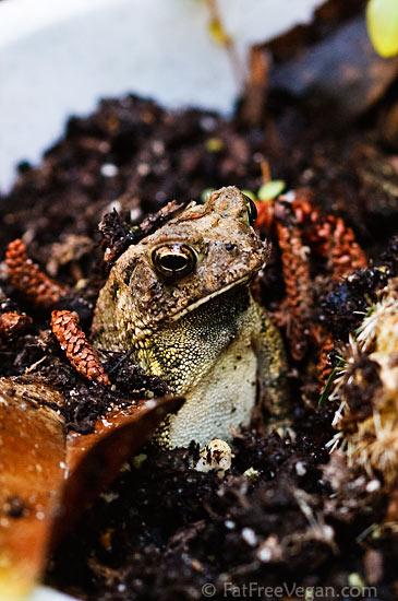 Toad in Cactus Pot
