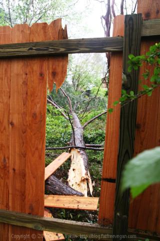 Tree through the fence