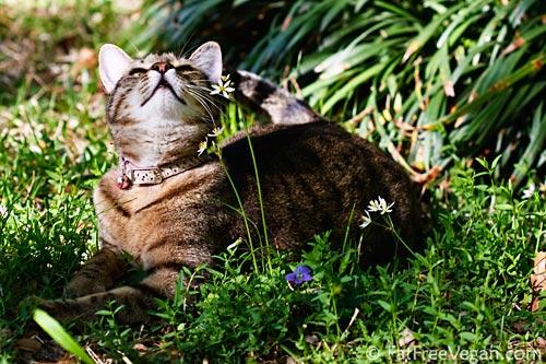 Springtime Cat