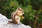 Thumbnail image for Cute Critters and Mountain Views: Our Second Colorado Vacation