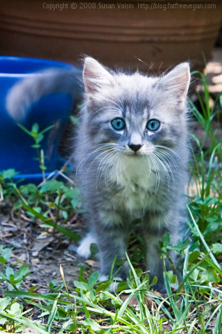 Unnamed Kitten