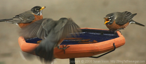 birdbath2
