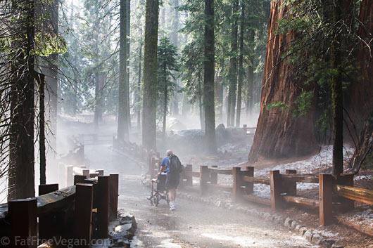 Wheeling through the mist