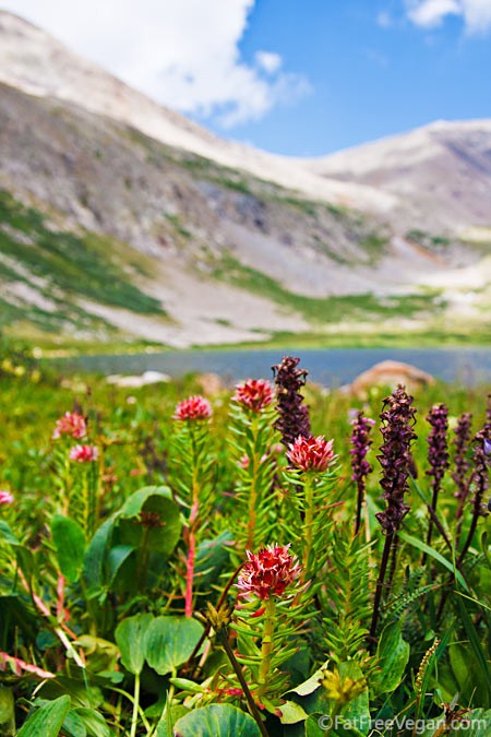 Wildflowers at Kite Lake