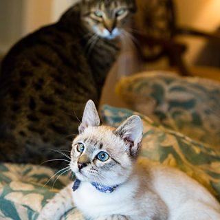 Loki and Leo