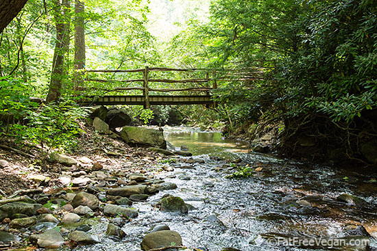 Stream at Montreat