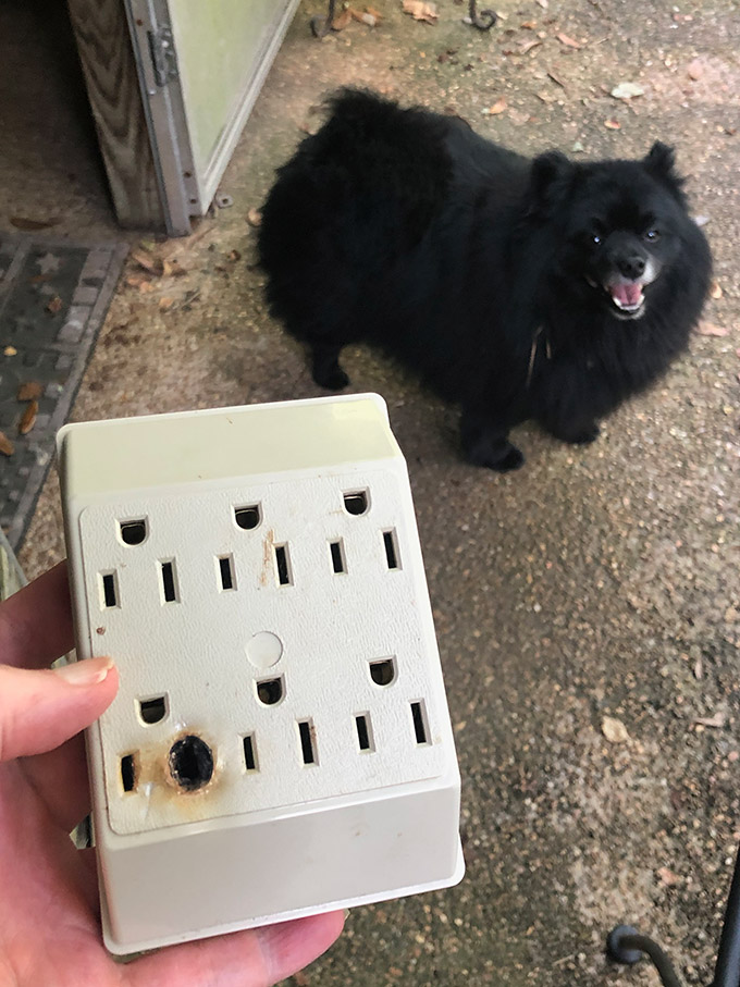My fried outlet adapter with cute dog